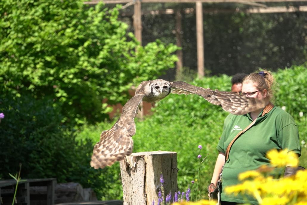 Dagbesteding kwetsbare doelgroepen roofvogels en uilen melkoehoe