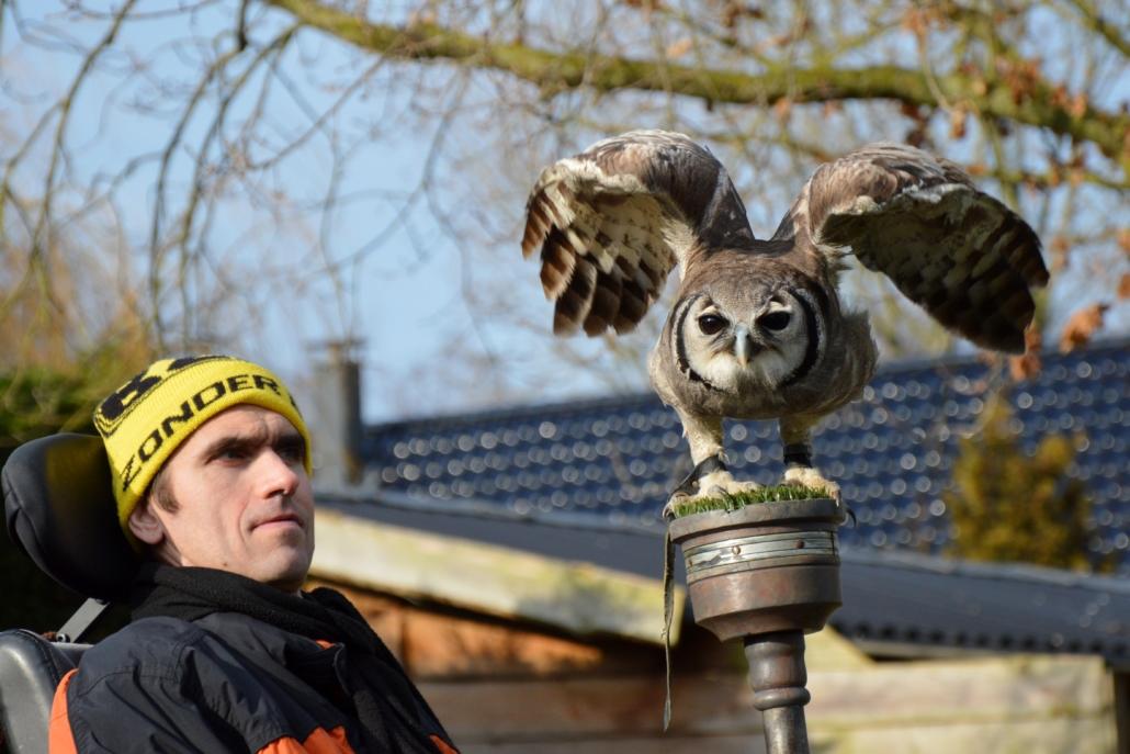 Dagbesteding roofvogels en uilen kwetsbare doelgroepen minder validen.