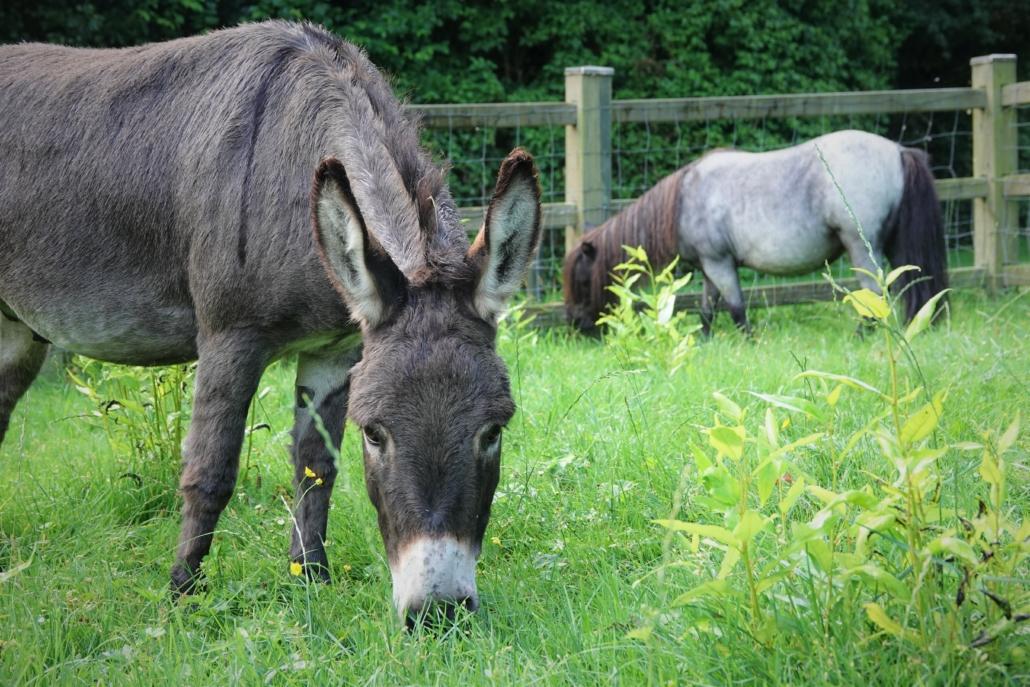 Kinderboerderij de Put Ezel Pony dieren andijk