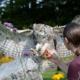 Roofvogels workshop uilen wings of change educatie demonstratie natuurbeleving
