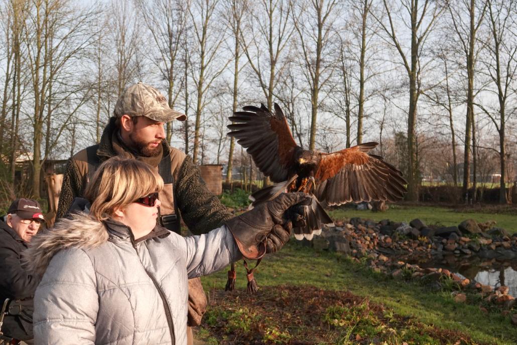 Kijken bij de training van roofvogels en uilen bij Inloophuis de Sociale Huiskamer