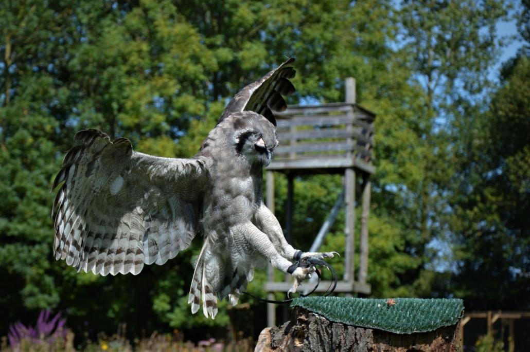 Training roofvogels en uilen zichtbaar Inloophuis de Sociale Huiskamer