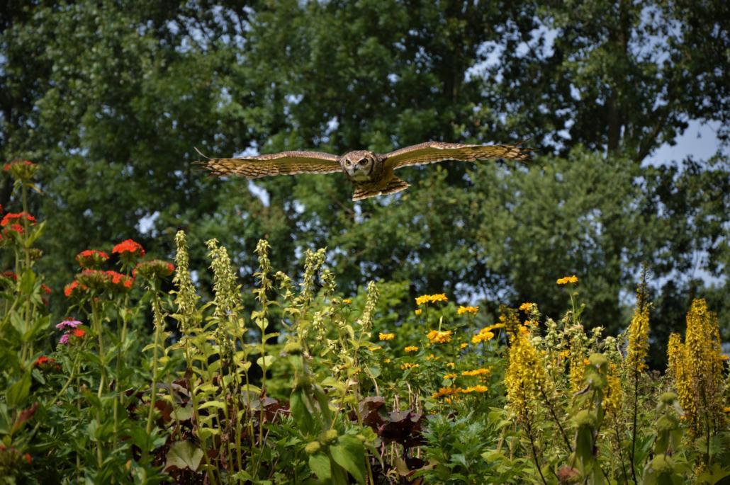 Wings of change natuurbeleving educatie magelhaen oehoe lesser horned owl