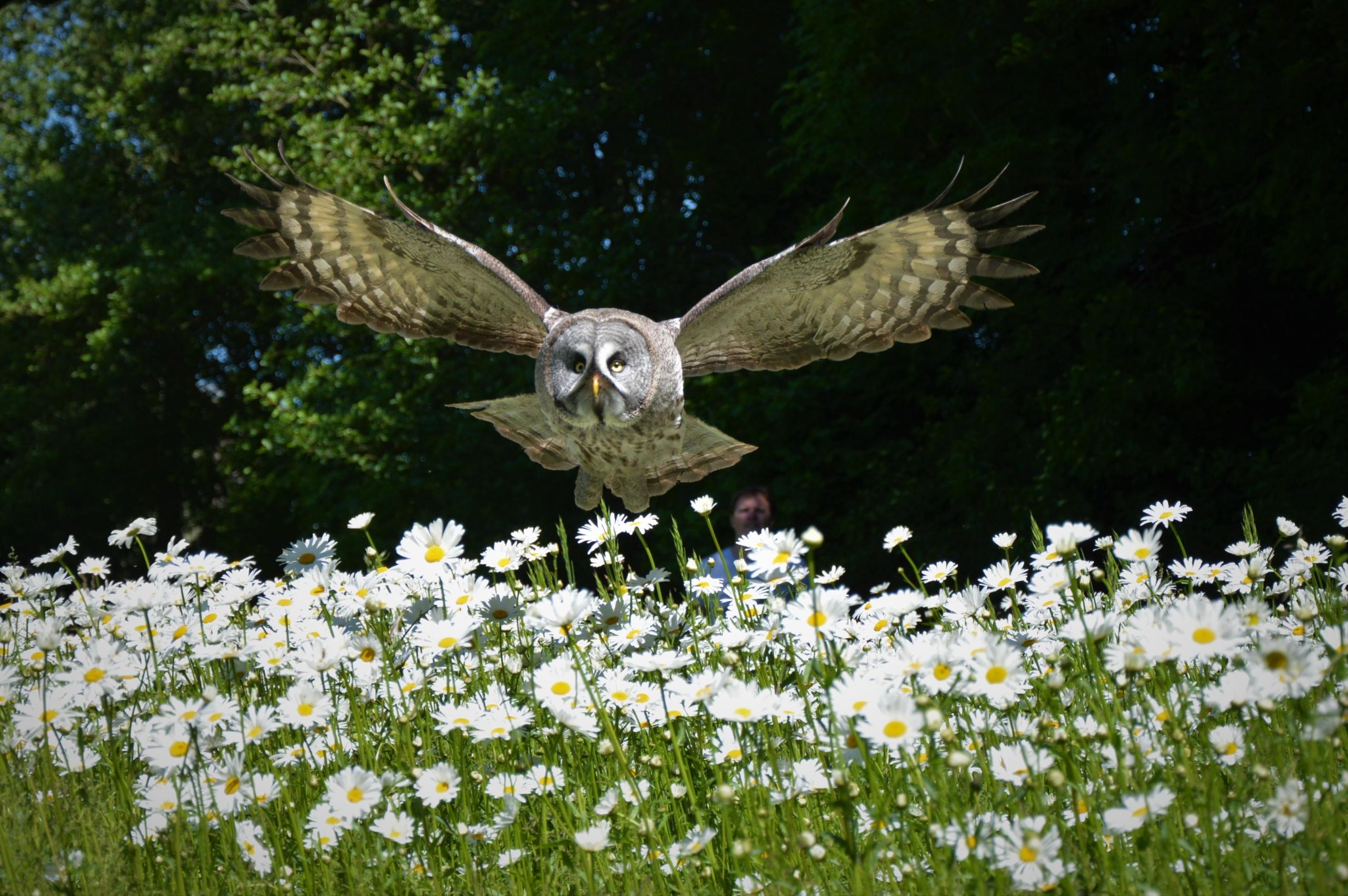 Contact gegevens Wings of Change - Zorg aan kwetsbare doelgroepen met roofvogels